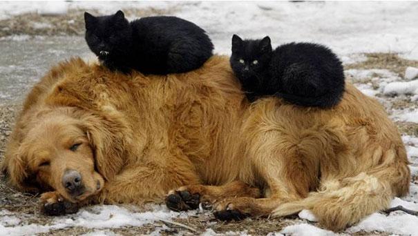 gatos y perros 13