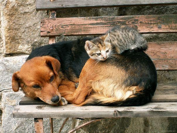 gatos y perros 14