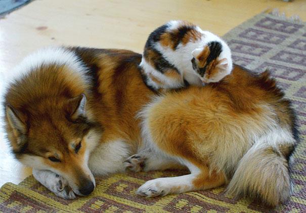 gatos y perros 15