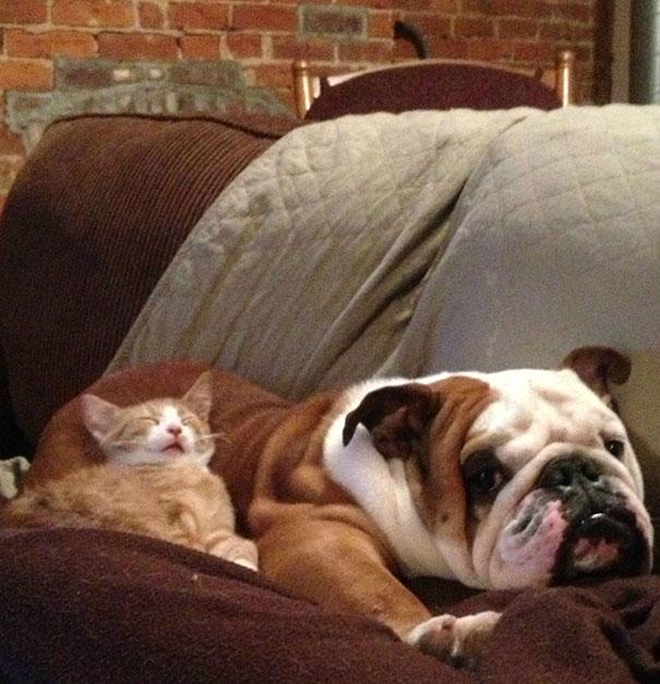 gatos y perros 16