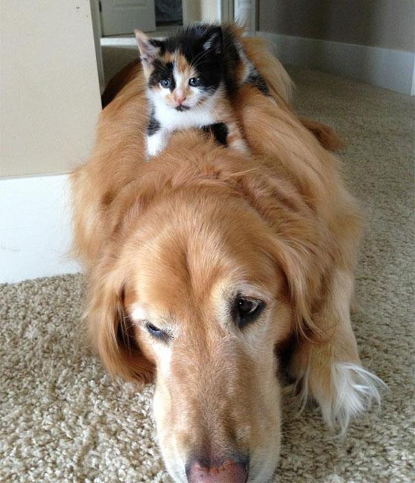 gatos y perros 18