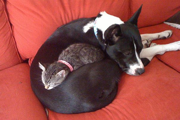 gatos y perros 19