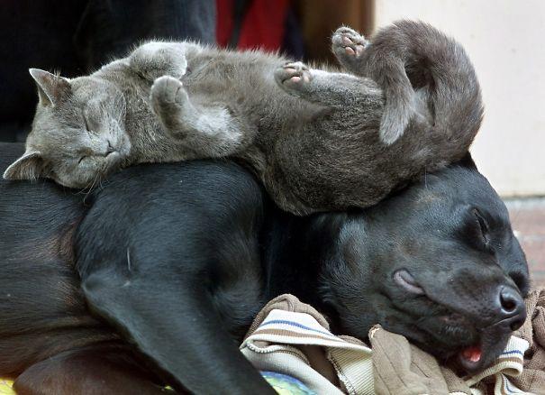 gatos y perros 2