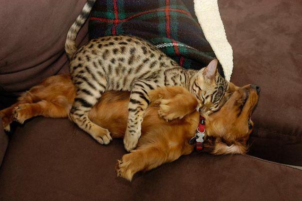 gatos y perros 3
