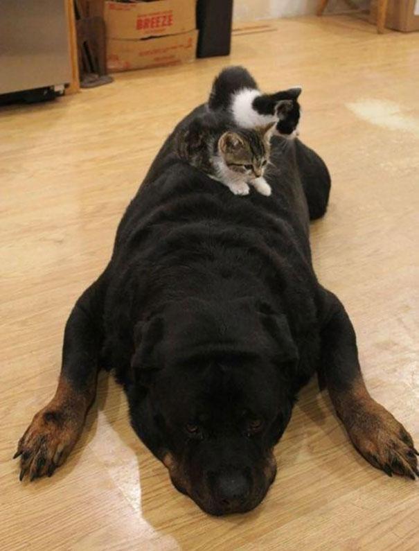gatos y perros 4