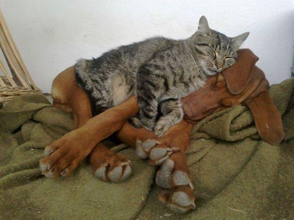 gatos y perros 6