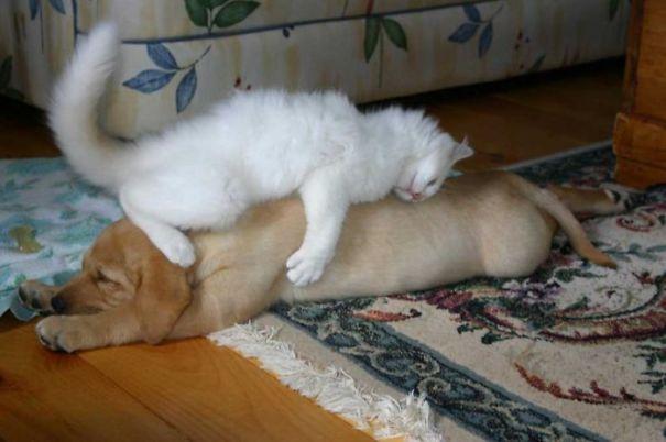 gatos y perros 7