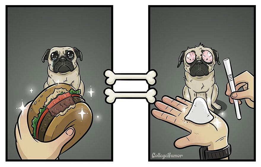 mundo perros 7
