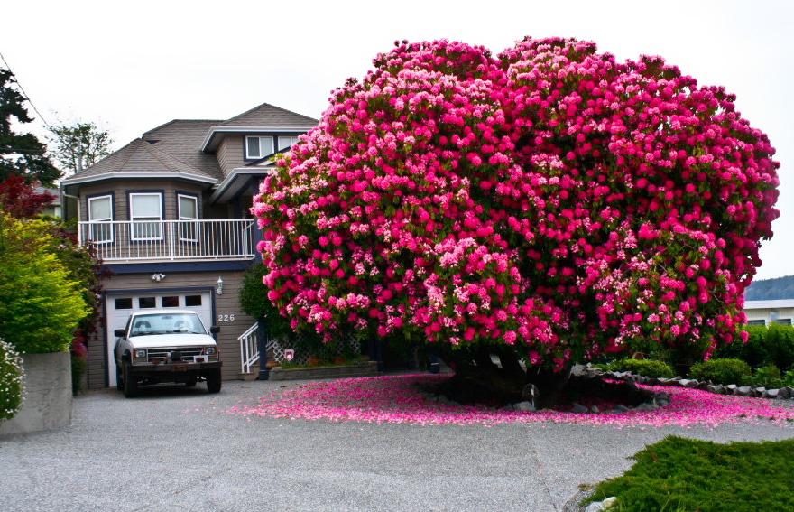arbol que parece un ramo de flores