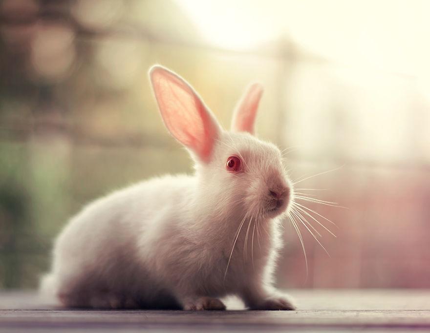 conejo 10