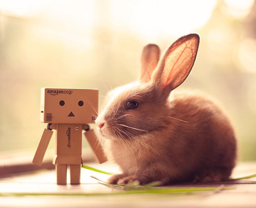 conejo 11