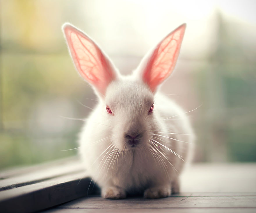 conejo 12