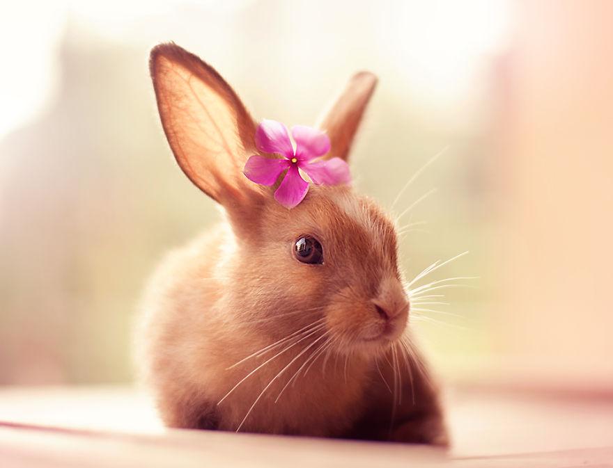 conejo 13