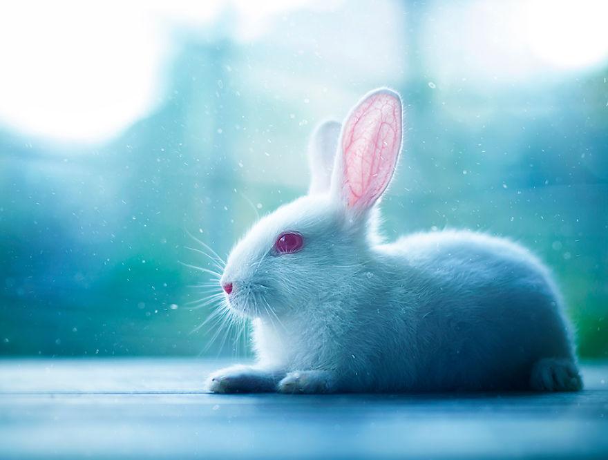 conejo 14