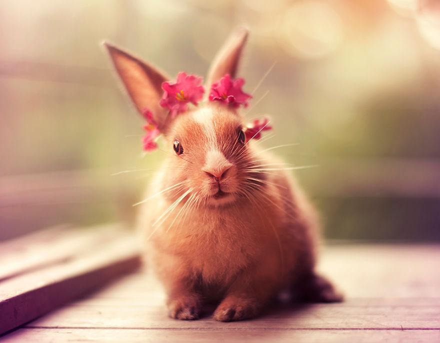 conejo 15