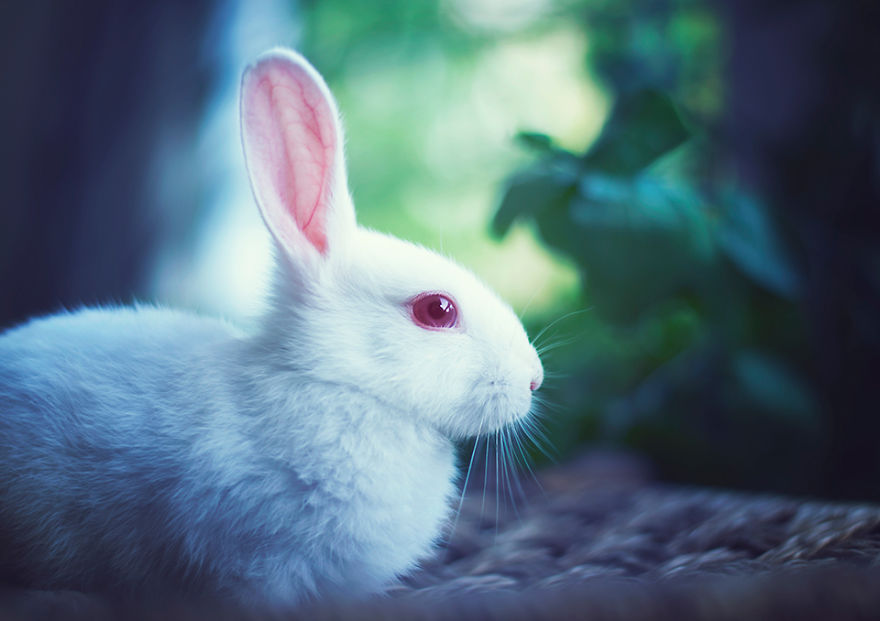 conejo 16