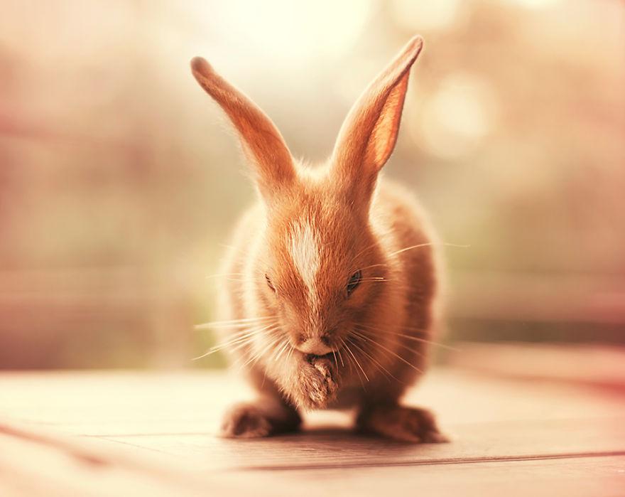 conejo 17