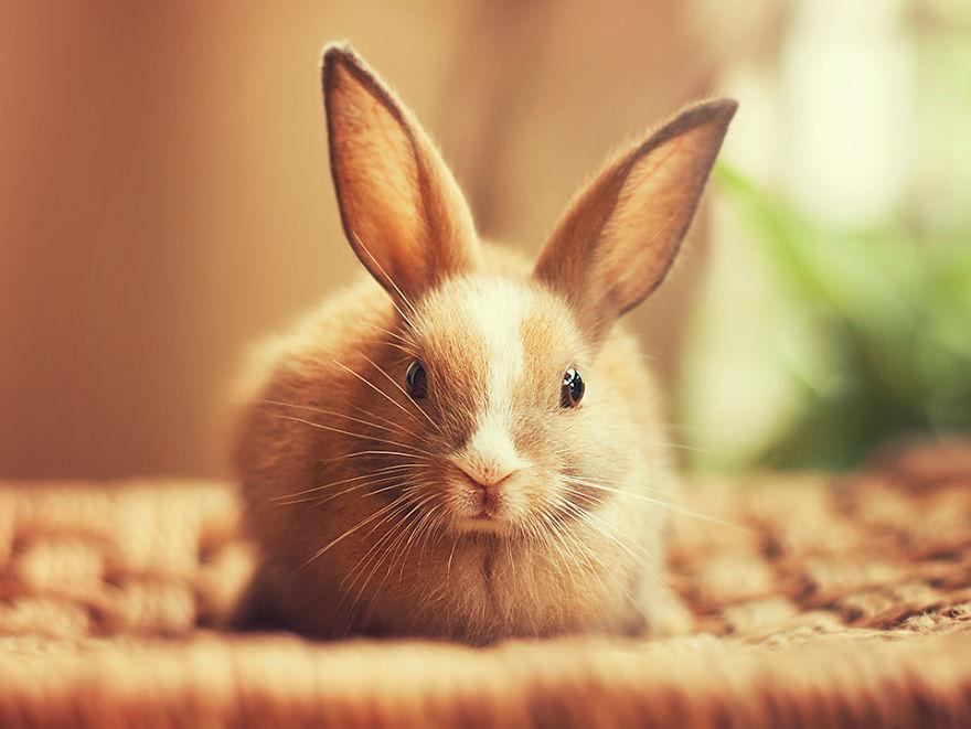conejo 2