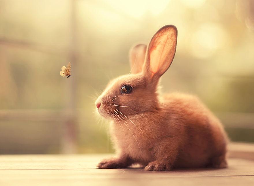 conejo 5