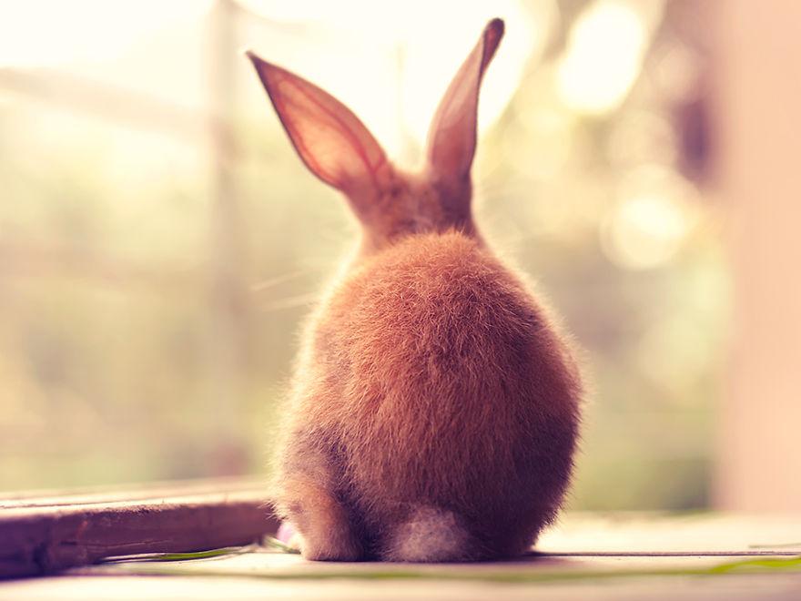 conejo 6