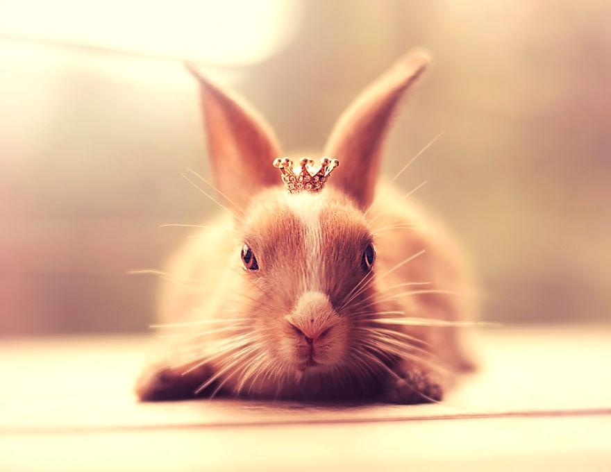 conejo 8