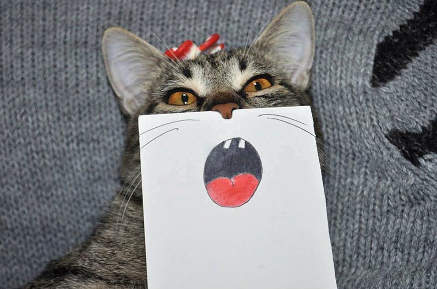 gato expresiones 2