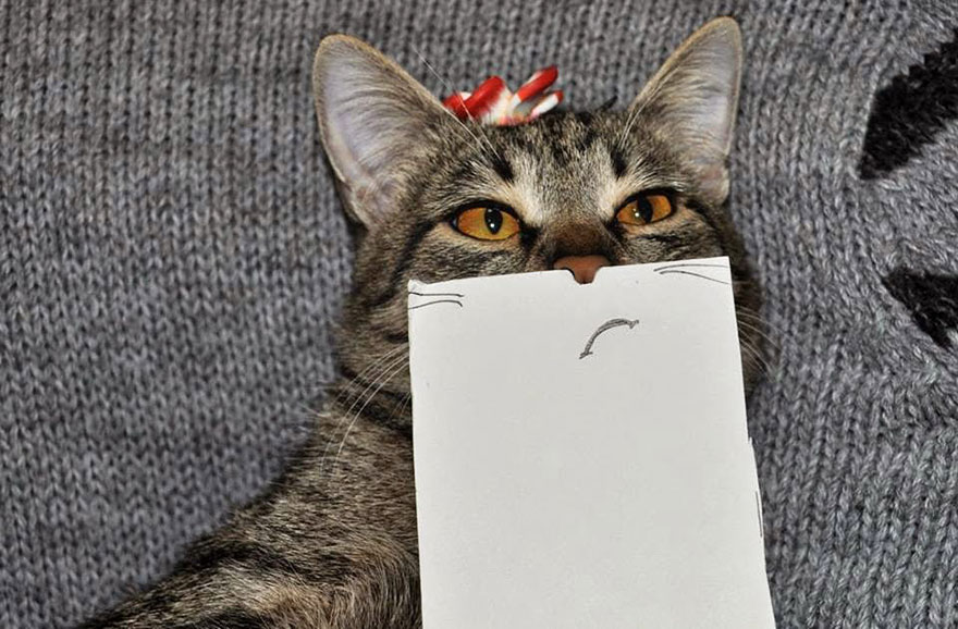 gato expresiones 3