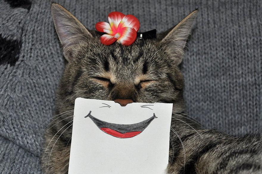 gato expresiones 4