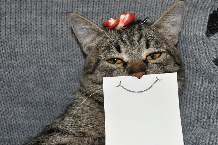 gato expresiones