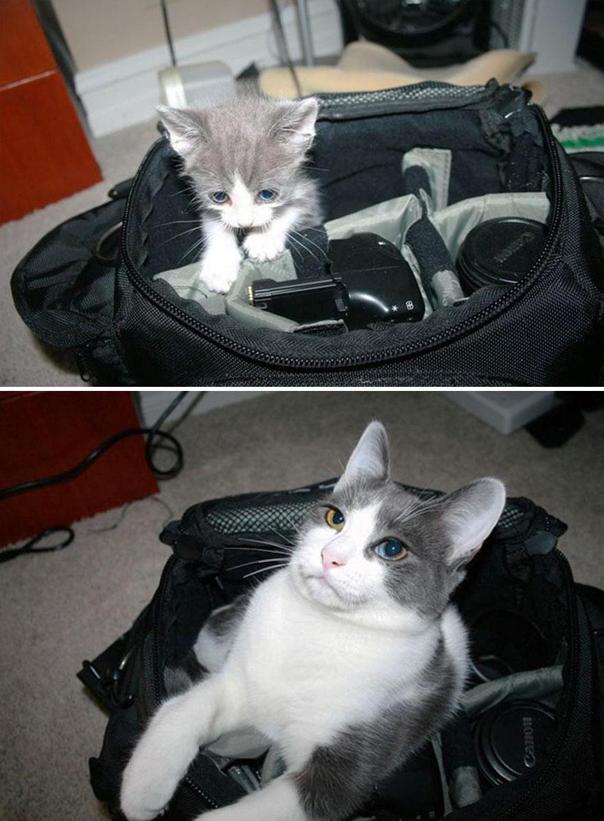 gatos antes y despues 11