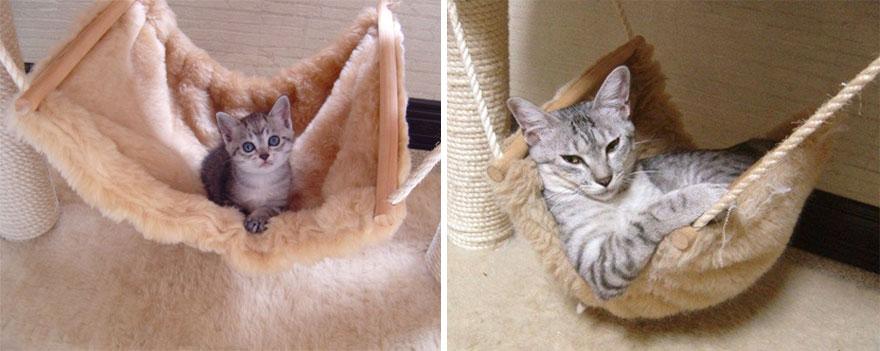 gatos antes y despues 13