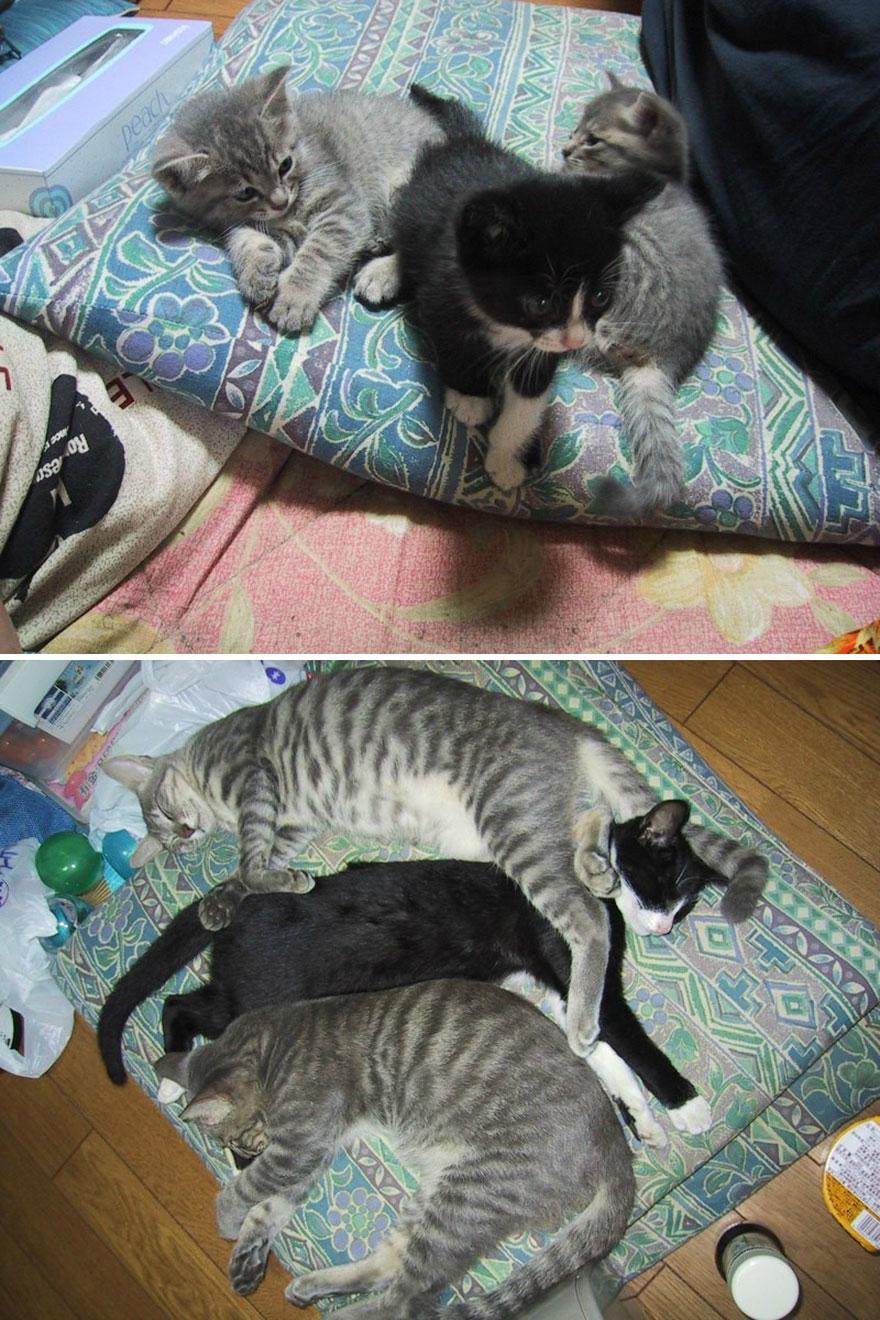 gatos antes y despues 15