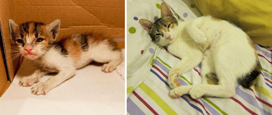 gatos antes y despues 19