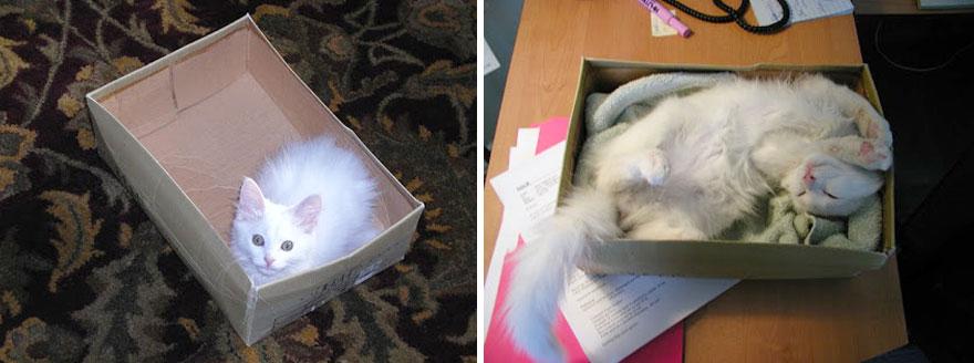 gatos antes y despues 2