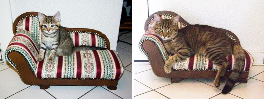 gatos antes y despues 20