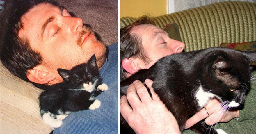 gatos antes y despues 21