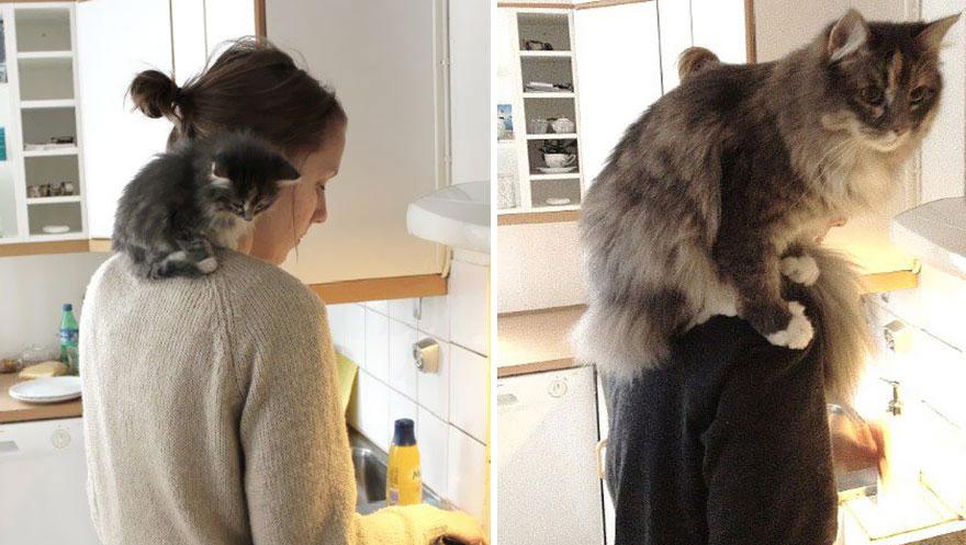 gatos antes y despues 4