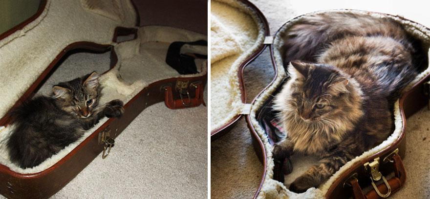 gatos antes y despues 6