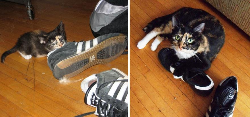 gatos antes y despues 8