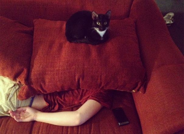 gatos con planes maquiavelicos 11