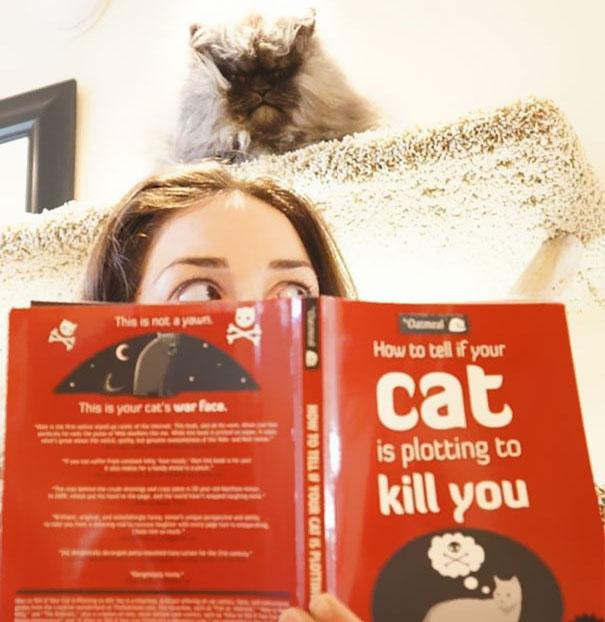 gatos con planes maquiavelicos 12