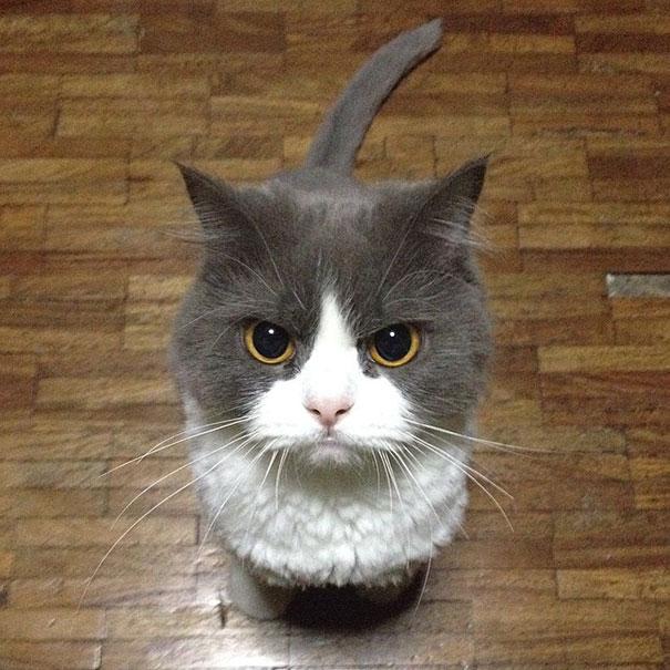gatos con planes maquiavelicos 14