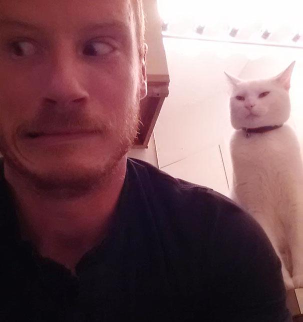 gatos con planes maquiavelicos 15