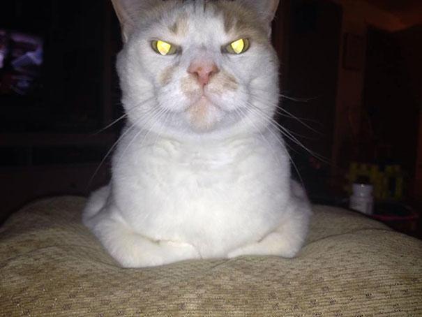gatos con planes maquiavelicos 17