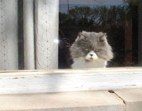 gatos con planes maquiavelicos 18