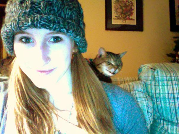 gatos con planes maquiavelicos 2