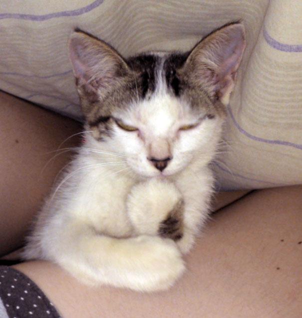 gatos con planes maquiavelicos 20