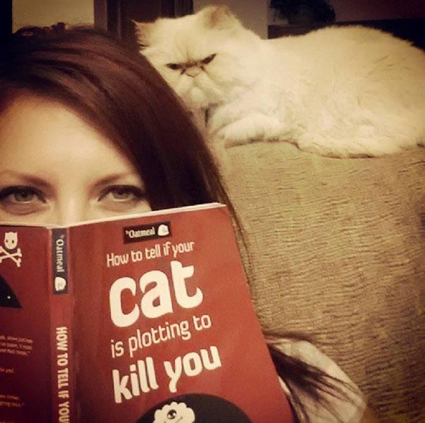 gatos con planes maquiavelicos 4