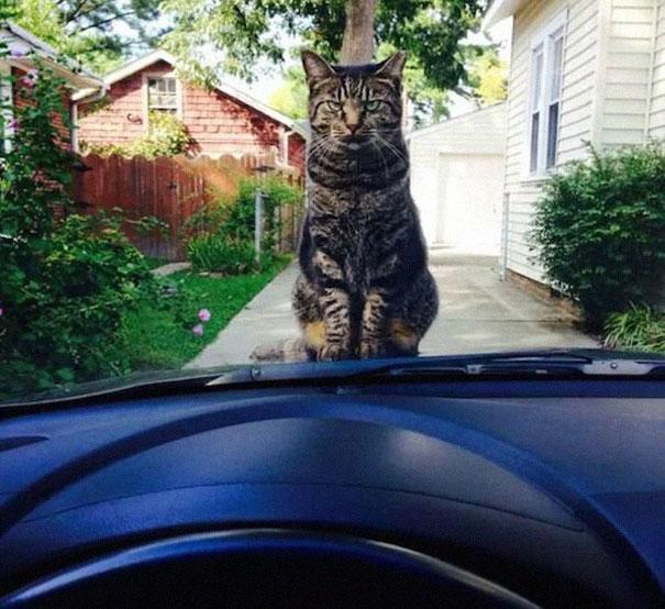 gatos con planes maquiavelicos 6