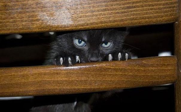 gatos con planes maquiavelicos 7